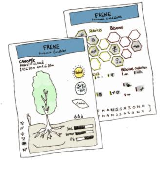 Kit Caragana – 40 fiches plantes à découvrir